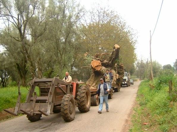 foto tratta da www.ulivisecolari.com/